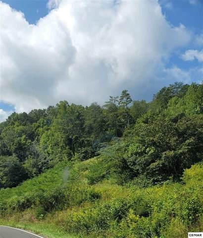 265 Timber Ridge Rd, Del Rio, TN 37727 (#230131) :: Four Seasons Realty, Inc
