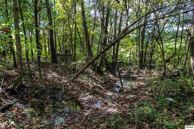 1536 Luther Memorial Rd, Parrottsville, TN 37843 (#230771) :: Jason White Team   Century 21 Four Seasons