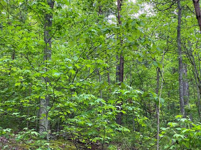 Lot 21 Elderberry Drive, Sevierville, TN 37876 (#242362) :: The Terrell-Drager Team