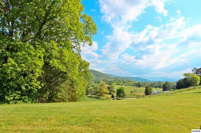 1.43 AC Tranquility Ridge Dr, Newport, TN 37821 (#196235) :: Billy Houston Group