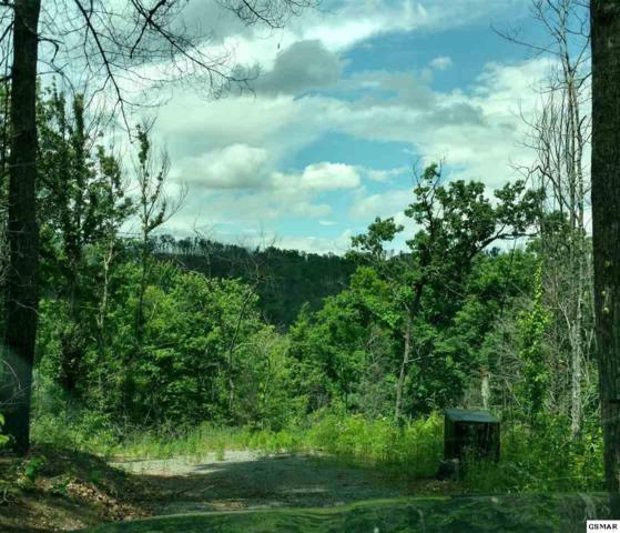 392 Wild Orchid Way, Gatlinburg, TN 37738 (#216222) :: Billy Houston Group