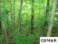 Lot 5 Sassafras Trail, Sevierville, TN 37876 (#207472) :: Colonial Real Estate