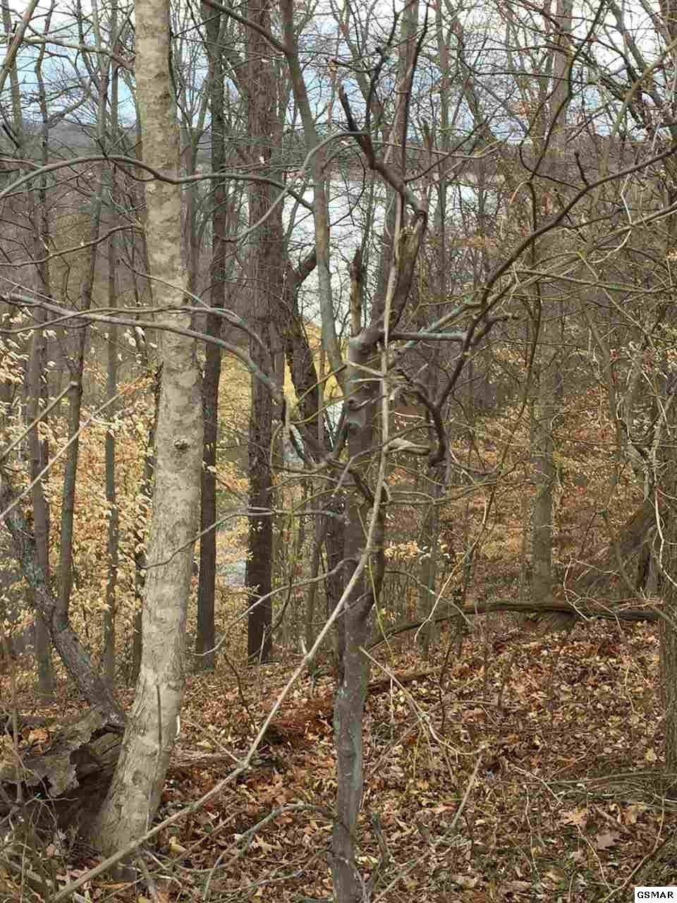 022 Woods Ridge Rd - Photo 1