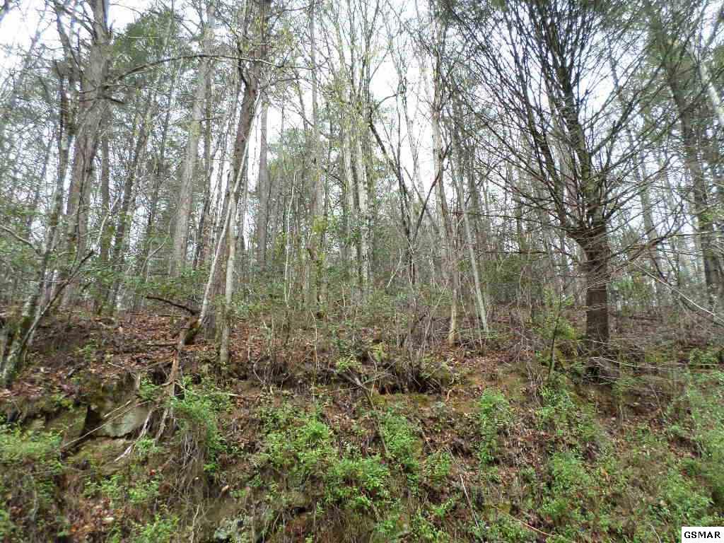 Trct 9-12 Boone Acres Lane - Photo 1