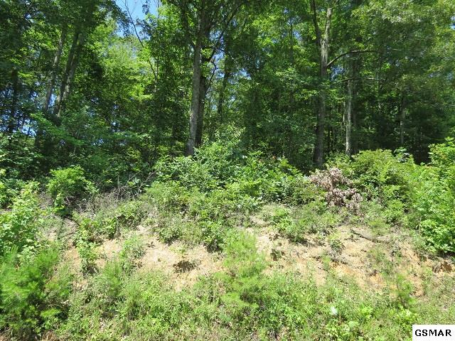Lot 3 Greasy Cove, Cosby, TN 37722 (#210510) :: SMOKY's Real Estate LLC
