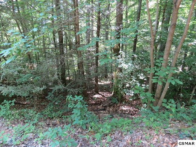 Lot 1 Greasy Cove, Cosby, TN 37722 (#210511) :: SMOKY's Real Estate LLC