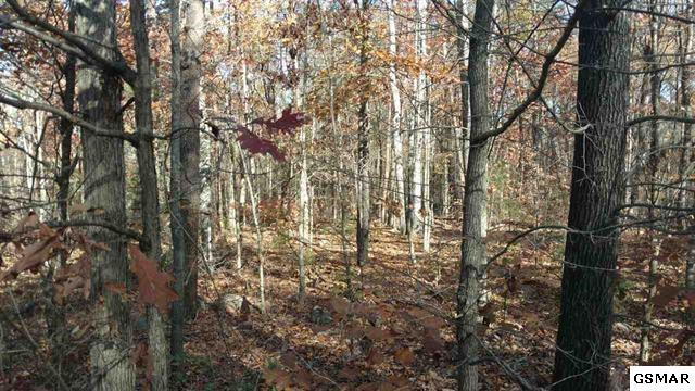 9.28 acres Bogard Rd, Newport, TN 37821 (#213445) :: SMOKY's Real Estate LLC