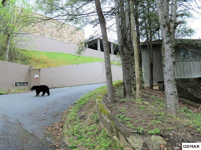 616 Turkey Nest Rd. #209, Gatlinburg, TN 37738 (#215767) :: Four Seasons Realty, Inc