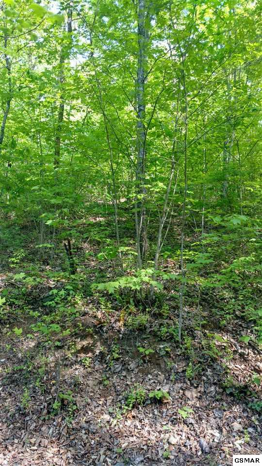 Lot 33 Timber Way, Pigeon Forge, TN 37863 (#216086) :: Colonial Real Estate