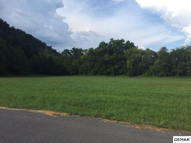 Lot 28 Kaylee Lane, Del Rio, TN 37727 (#216452) :: Billy Houston Group