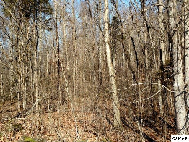 10.46 Acres Middle Fork Way, Del Rio, TN  (#217767) :: The Terrell Team