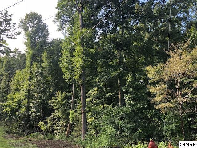 1500 Black Oak Dr Lot 41, Sevierville, TN 37876 (#217897) :: Billy Houston Group