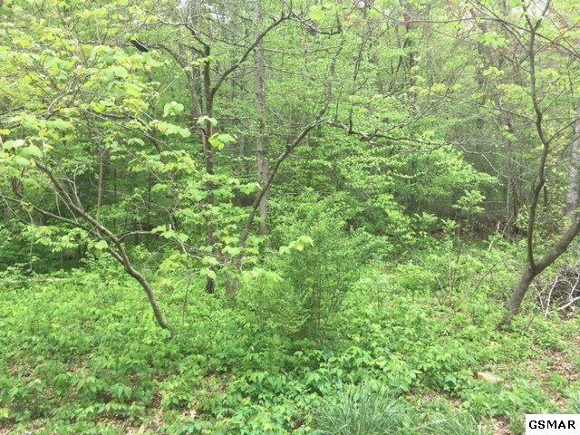 Lot 1296 Raymond Hollow Rd, Sevierville, TN 37876 (#218439) :: Billy Houston Group
