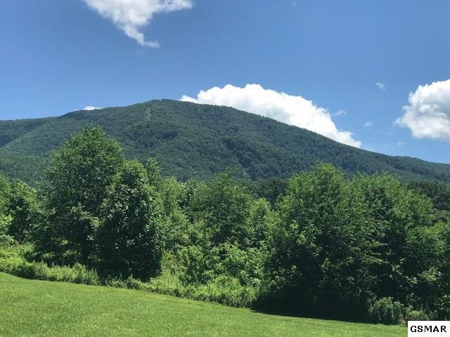 Lot 66 Clear Valley Dr, Sevierville, TN 37862 (#221106) :: The Terrell Team