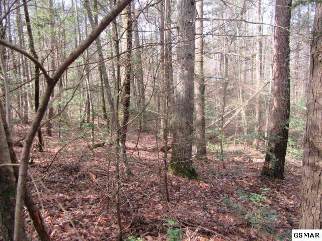 Cub Circle, Sevierville, TN 37862 (#221701) :: Prime Mountain Properties