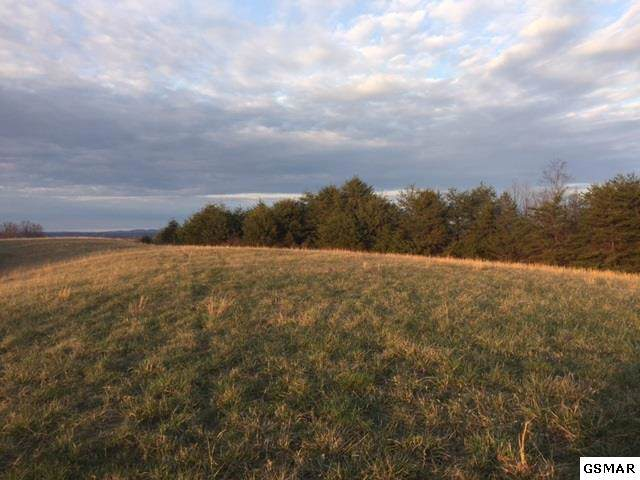74.7 Acres Swatsell Rd, Parrottsville, TN 37843 (#224685) :: Colonial Real Estate