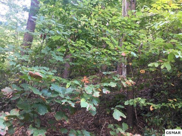 Lot 19 Tanrac Trl, Gatlinburg, TN 37738 (#224872) :: Four Seasons Realty, Inc