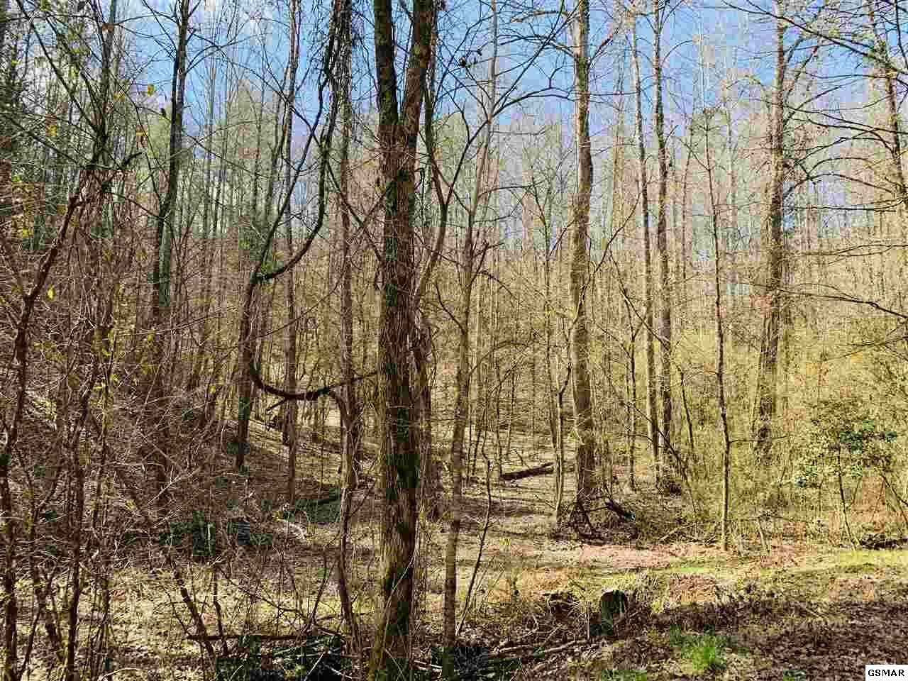Lot 9 Sulpher Springs Road - Photo 1