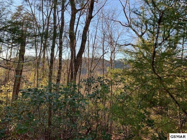 Lot 115 Whetstone Rd, Sevierville, TN 37862 (#227372) :: The Terrell Team
