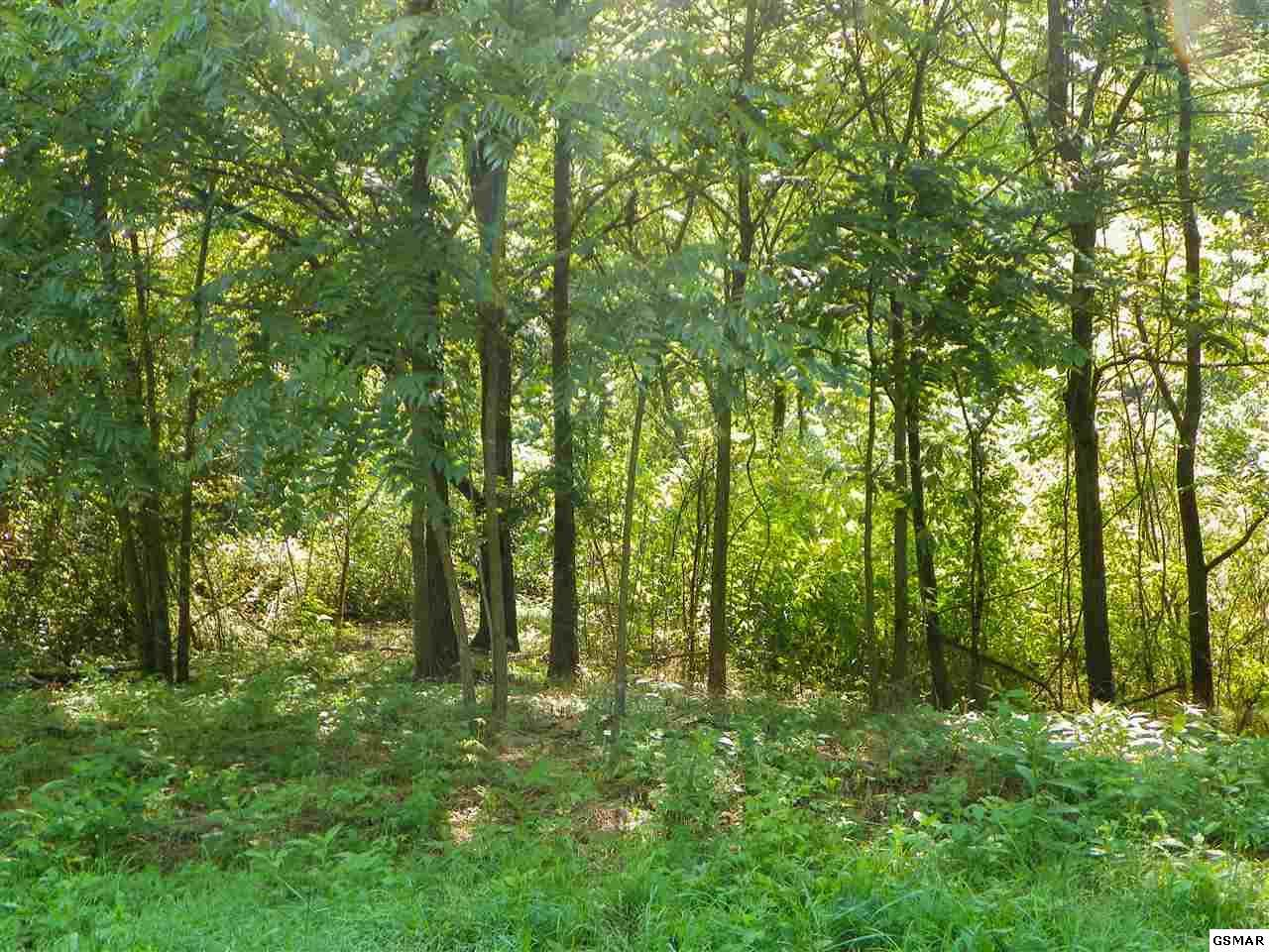 51 +/- Acre Tract, Bogard Road - Photo 1