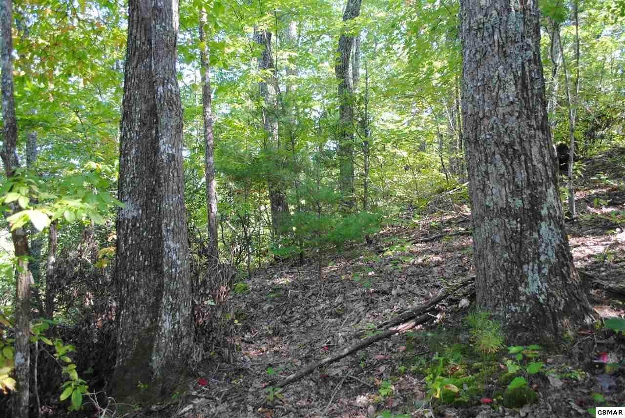 Pioneer Trail - Photo 1