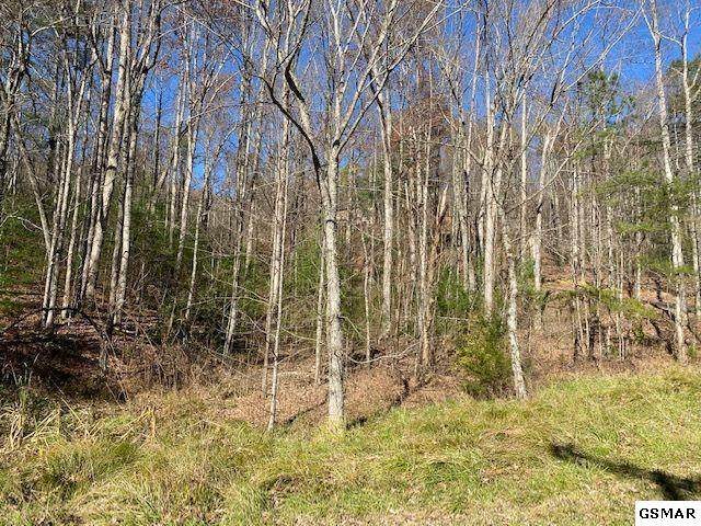 Lot 56 Wintergreen Dr, Sevierville, TN 37876 (#231237) :: Colonial Real Estate