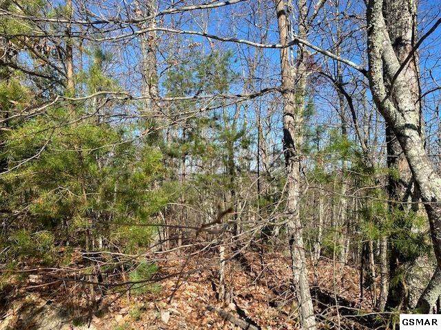 Lot 12 Boxelder St, Sevierville, TN 37876 (#231246) :: Colonial Real Estate