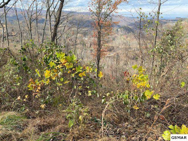 Lot 24 Stone Fence Ln, Gatlinburg, TN 37738 (#231276) :: Jason White Team | Century 21 Legacy