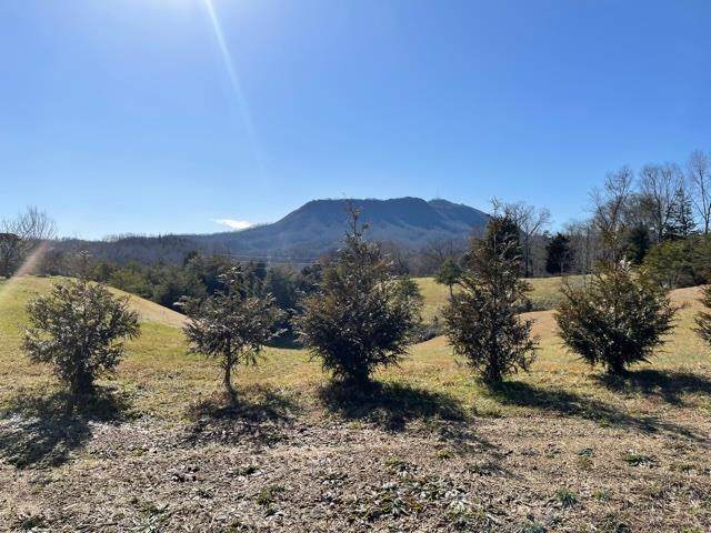 Lot 3 Willow Wood Dr, Sevierville, TN 37876 (#240972) :: Prime Mountain Properties