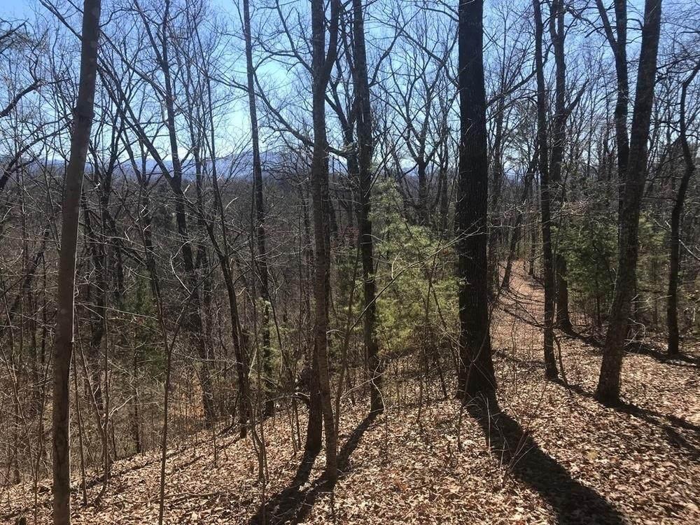 Tall Oak Way - Photo 1