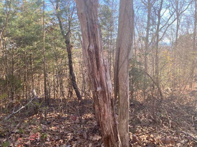 Lot 33 Woodchuck Dr - Photo 1