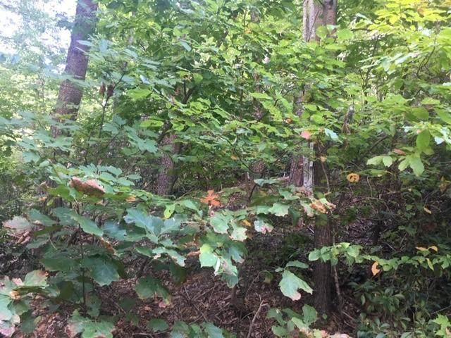 Lot 37 Woodchuck Dr - Photo 1