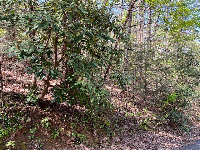 2006 Orchard Dr, Sevierville, TN 37876 (#241973) :: Prime Mountain Properties