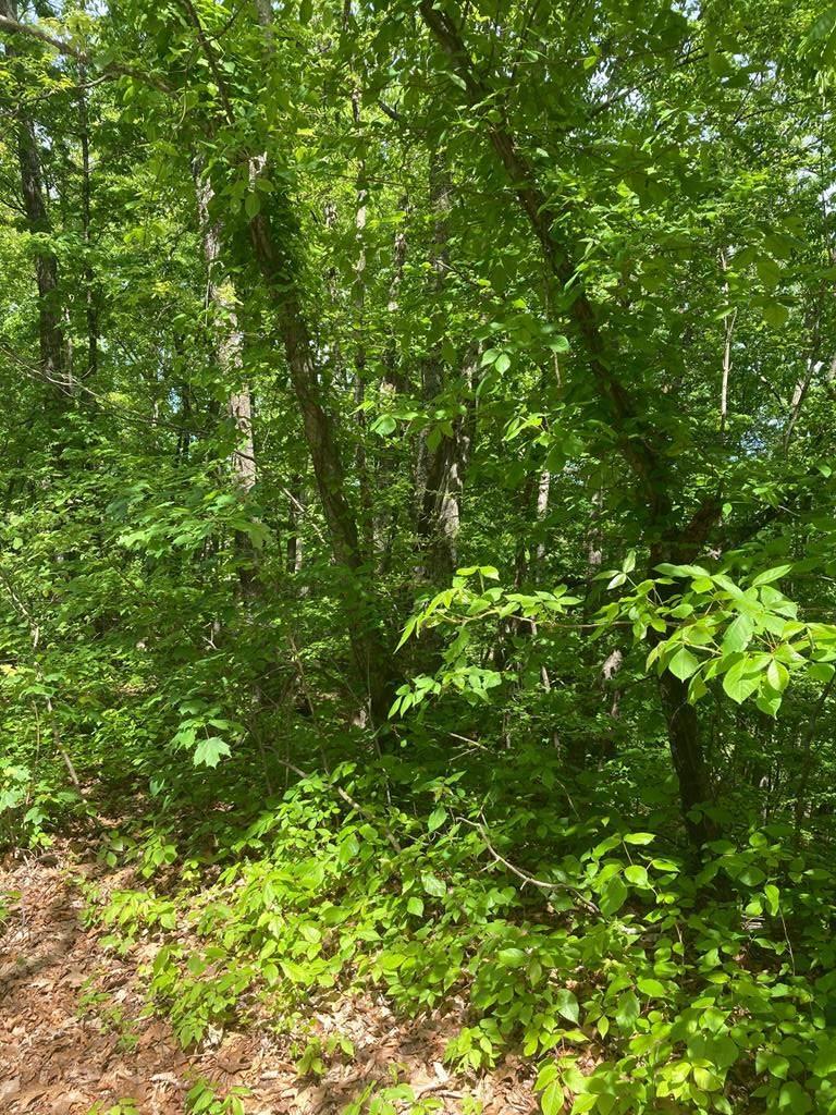 Hatcher Top Hatcher Top Rd - Photo 1