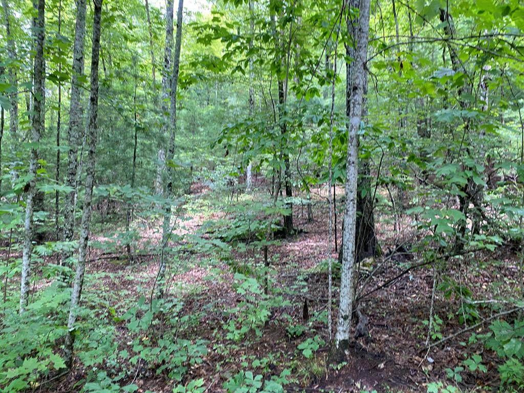 Lot 24 Fox Hunters Lane - Photo 1