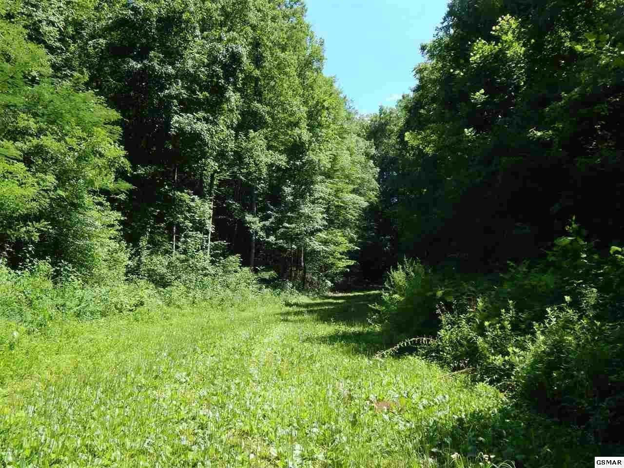 5.3 Acres Pea Hollow Rd. - Photo 1