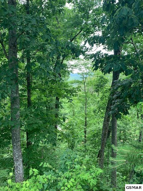 Lot 45 Cloud View Drive, Sevierville, TN 37862 (#222538) :: The Terrell Team