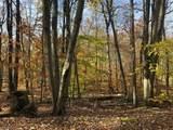 0 The Lake Anne Estate - Photo 11