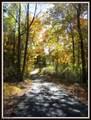 8 Sycamore Trail - Photo 2