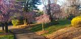 10 Overlook Park - Photo 4
