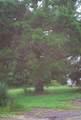 9337 Boyette Rd - Photo 3