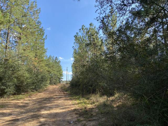 185 Mill Creek Rd, Poplarville, MS 39470 (MLS #368549) :: Berkshire Hathaway HomeServices Shaw Properties
