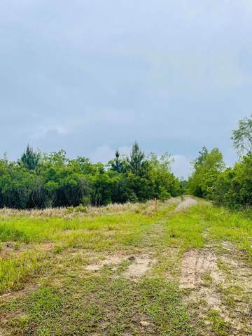 3.85 Acres Goff Road, Lucedale, MS 39452 (MLS #373920) :: Coastal Realty Group