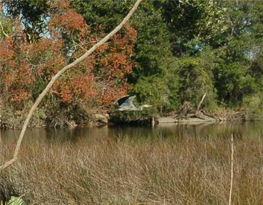 0 Cove Dr, Biloxi, MS 39531 (MLS #296753) :: Ashley Endris, Rockin the MS Gulf Coast
