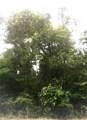20710 Imperial Oak - Photo 3