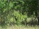 28931 Village Trail Court - Photo 1