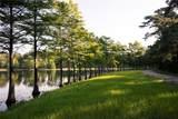 519 Woodsy Pine Court - Photo 13