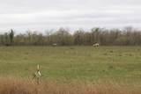 1809 Acklen Run Drive - Photo 2