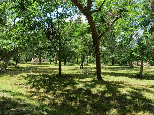 0 Hackamore Road, Simonton, TX 77485 (MLS #19030349) :: Texas Home Shop Realty