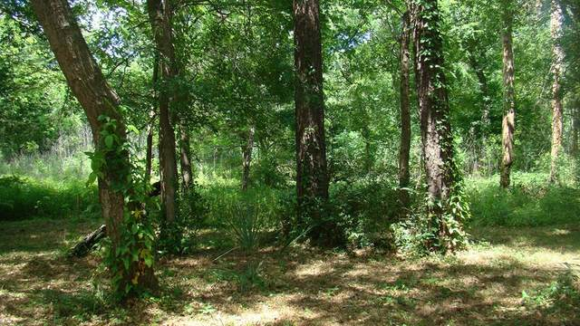 1313 Woodvine, Friendswood, TX 77546 (MLS #20018575) :: Guevara Backman